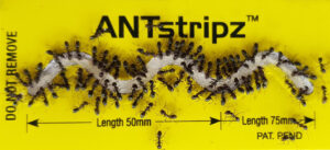 Sundew ANTstripz for professional ant gel placement